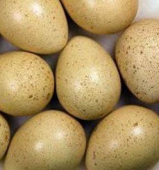 Jaja bażantów : srebrnych