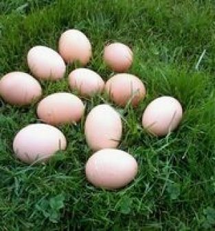 Wiejskie jajka duże