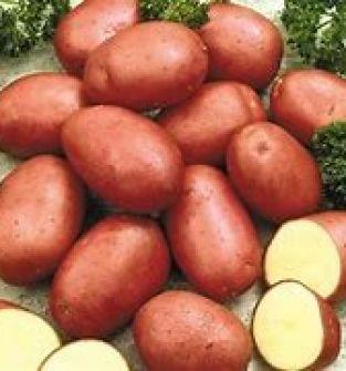Ziemniaki jadalne odmiana Red Sonia