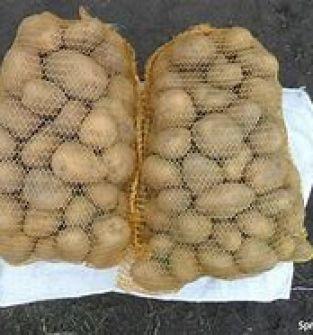 Ziemniaki jadalne odmiana Vineta
