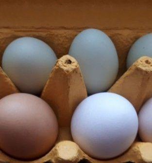 Swojskie jaja