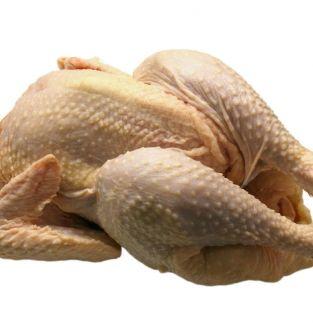 Tuszka młodego kurczaka