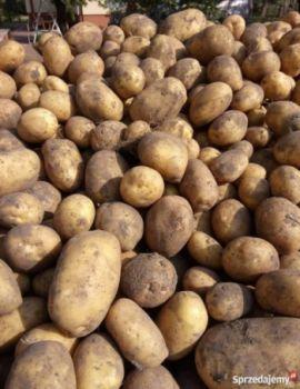 Ziemniaki irga młode