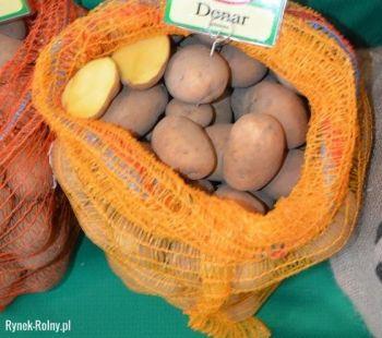 Ziemniaki jadalne odmiana DENAR