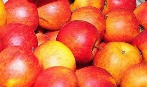 Jabłka odmiany Champion
