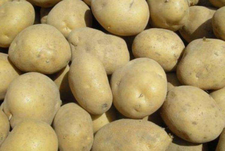 Ziemniaki jadalne odmiana IRGA